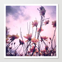 Alexandrina Saucer Magnolia Tree Canvas Print