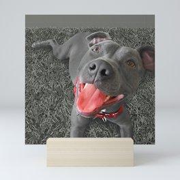 PACO (shelter pup) Mini Art Print