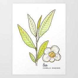 tea botanicals | Camelia // Tea (black, green, oolong) Art Print