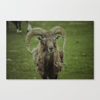 ram Canvas Prints featuring Ram by Jeremy Jon Myers