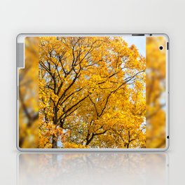 Yellow leaves autumn trees Laptop & iPad Skin