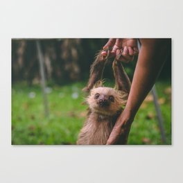 Sloth Handling Canvas Print