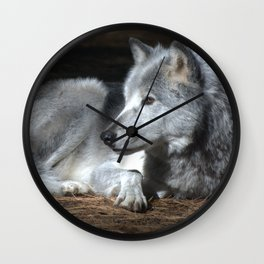 Gray Wolf at Rest Wall Clock