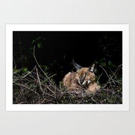 Napping Cat Art Print
