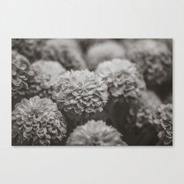 Sepia Black and White Botanical -- Chrysanthemums Canvas Print