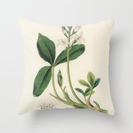 Bogbean (Menyanthes trifoliata)  from Medical Botany (1836) by John Stephenson and James Morss Churc Throw Pillow