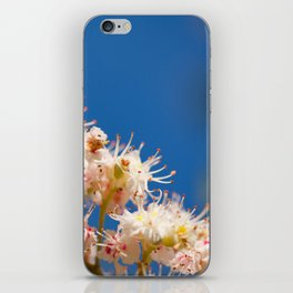 Macro of blooming Aesculus iPhone Skin
