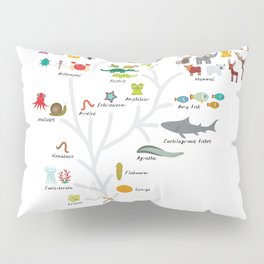 Evolution in biology, scheme evolution of animals on white. children's education back to scool Pillow Sham