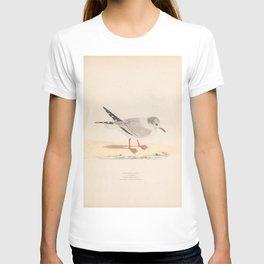Laughing Gull, larus atricilla5 T-shirt