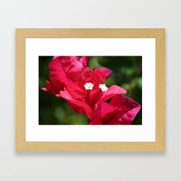 Sanibel Flower Framed Art Print