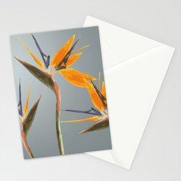 Strelizia - Bird of Paradise Flowers Stationery Cards
