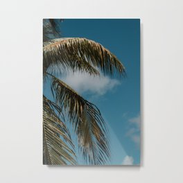 Palm tree vibes || Summer, island life, Curaçao || Tree, nature, ocean, Caribbean Metal Print