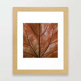 MACHO MANS ART OLD LEATHERY BROWN LEAF Framed Art Print