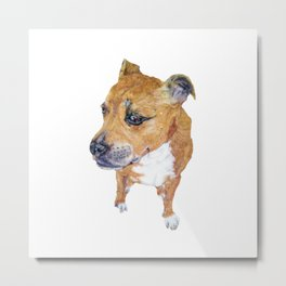 Staffordshire bull terrier needle felted portrait Metal Print