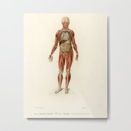 Myology and disposition of the viscera illustrated by Charles Dessalines D' Orbigny (1806-1876). Metal Print