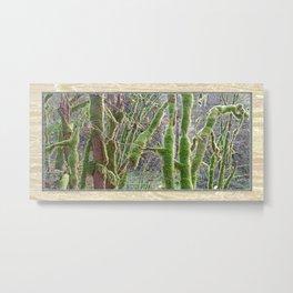 YOUNG RAINFOREST VINE MAPLES Metal Print