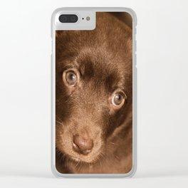 Puppy- Australian Kelpie Clear iPhone Case