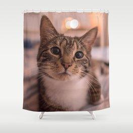 A relaxing kitty / kitten Shower Curtain
