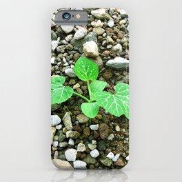 Squash Plant iPhone Case