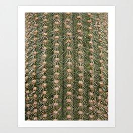 Cactus close up Art Print