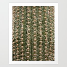 Cactus close up Art Print