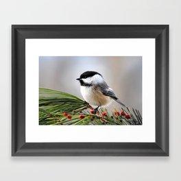 Pine Chickadee Framed Art Print