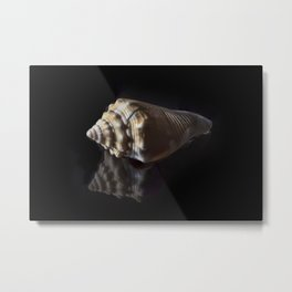 Spiral Sea Shell Metal Print