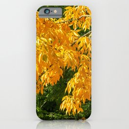 Autumn Yellow 1 iPhone Case