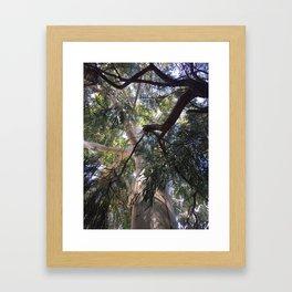 Ozzy big tree Framed Art Print