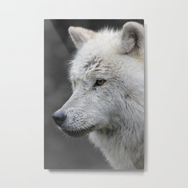 Side Portrait of an Arctic Wolf Metal Print