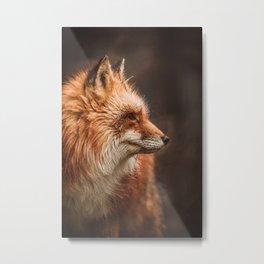 Red Fox (Vulpes vulpes) Metal Print