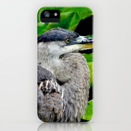 Blue Heron at the pond iPhone Case