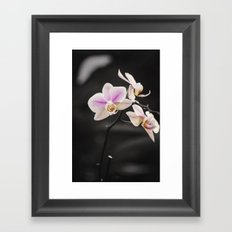 Orchid Dance Framed Art Print