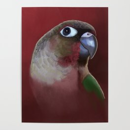 Yellow - Sided Green Cheek Conure Parakeet Poster