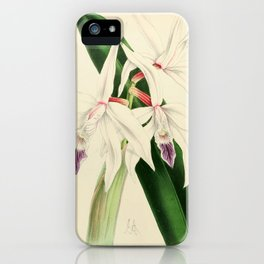Laelia Pilcheri iPhone Case