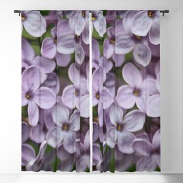 Close Up Of Persian Lilac Blossom Blackout Curtain