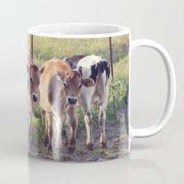Steers in a farmland at sunset Coffee Mug