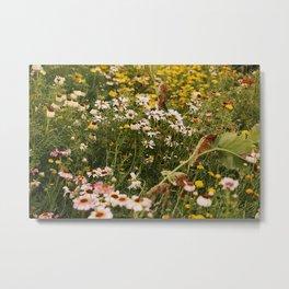 Sunny garden Metal Print