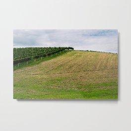 Vineyard II Metal Print