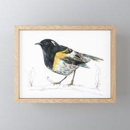 Hihi, New Zealand native Stitchbird Framed Mini Art Print