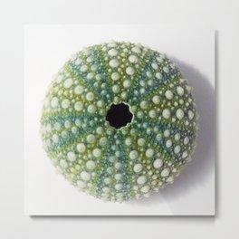 Green Sea urchin shell Metal Print