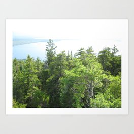 Scenes from Nature Art Print