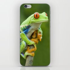 Red-eyed Tree Frog 4 iPhone & iPod Skin