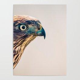 Avian Poster