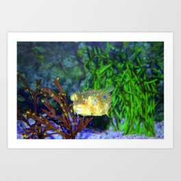 Striped Burrfish Art Print