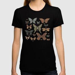 Butterflies and Moth Specimens T-shirt