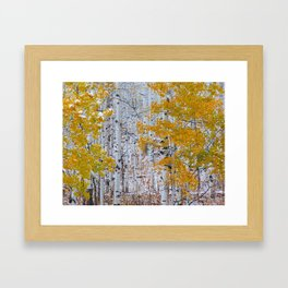 Snowy Aspens Framed Art Print