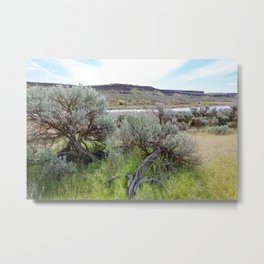 Crab Creek in Central Washington Metal Print