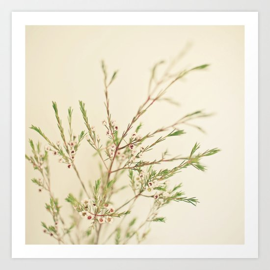 Waxflower Art Print