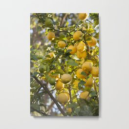 The Lemon Tree Metal Print